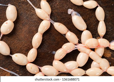 eggs of snake on a chop board