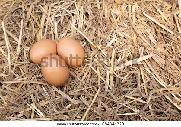 Eggs in the straw nest. Top view and Copy space