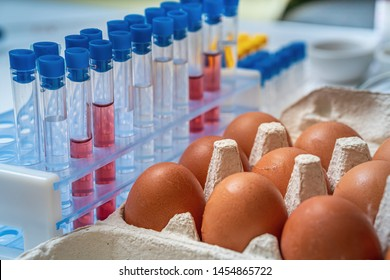 Eggs are tested for salmonella in laboratory. Food safety research.