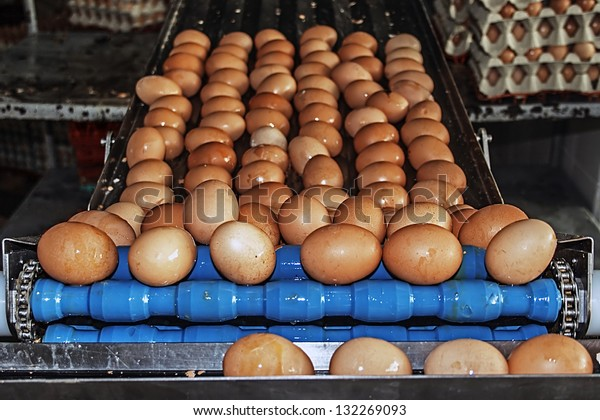 Eggs washed and carried by a blue industrial line