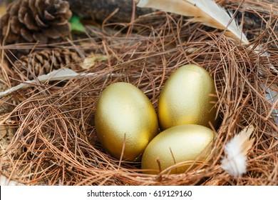 Eggs,Golden egg,nest egg.