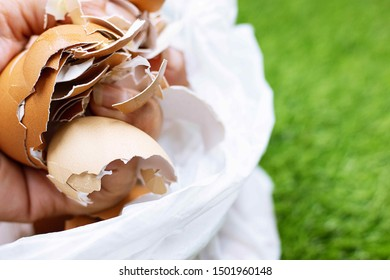 An eggshell is the outer covering of a hard-shelled egg and of some forms of eggs with soft outer coats.