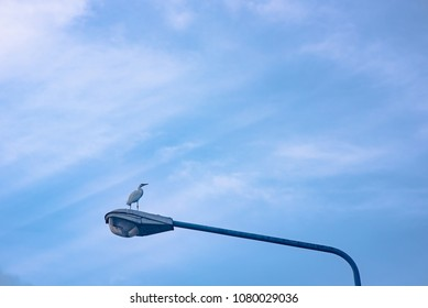 Egret bird stand on street lamp with clouds and ray of sunshine background