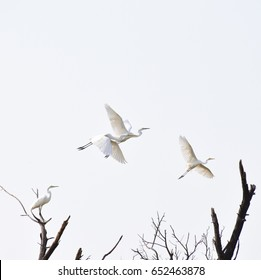 Egret Minimal