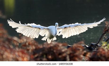 An egret in the morning sun.