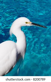 Egret Near Water