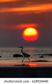 Egret on beach in sunset.