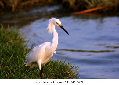 Egret on the lake shore