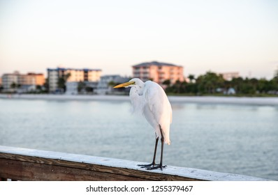 egret on the pier waiting to be fed
