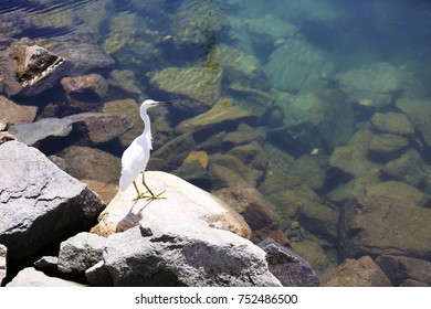 Egret Perching on a Rock