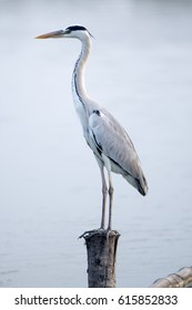 Egret perching on the wood