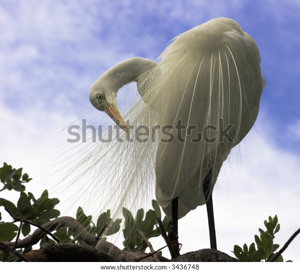 Egret Self Cleaning