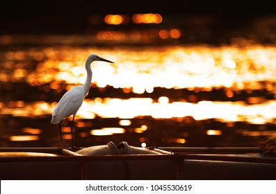 egret silhouette sunset on the river