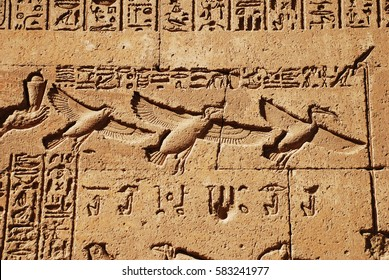 Egypt. Ancient egyptian temple. Detail of hieroglyphic inscription with flying birds