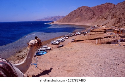Egypt: A camel is overlooking the Blue hole diving spot near Dahab in the Sinai desert at the Gulf of Akaba