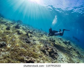 egypt dahab red seascuba diving