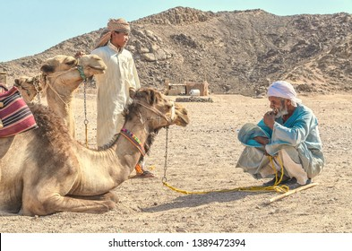 Egypt, Desert, Bedouin village August 29, 2017: Camel drivers, customs and traditions, a young and elderly Bedouin near the camels in the desert