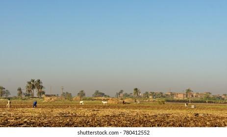 Egyptian countryside fields