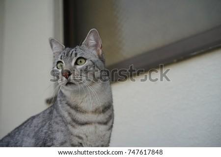 https://image.shutterstock.com/image-photo/egyptian-mau-outside-450w-747617848.jpg