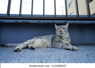 Egyptian mau at rooftop