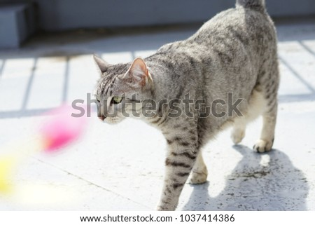 https://image.shutterstock.com/image-photo/egyptian-mau-rooftop-450w-1037414386.jpg