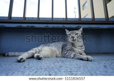 https://image.shutterstock.com/image-photo/egyptian-mau-rooftop-450w-1111836557.jpg