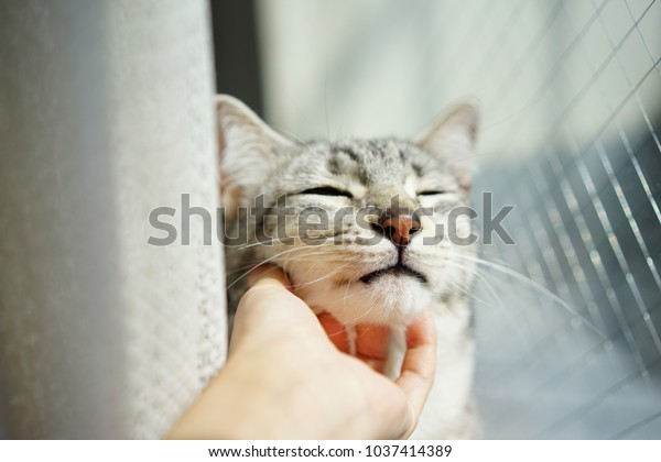 https://image.shutterstock.com/image-photo/egyptian-mau-rooftop-600w-1037414389.jpg