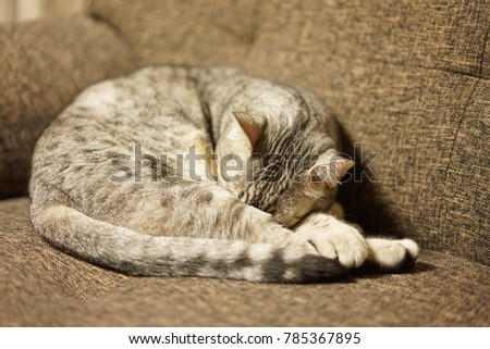 https://image.shutterstock.com/image-photo/egyptian-mau-room-450w-785367895.jpg