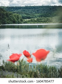 The Ehmetsklinge in the national park Stromberg-Heuchelberg in Germany surrounded by poppy seeds
