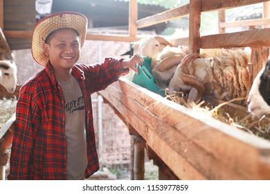eid al adha greeting qurbani with farmer man on farm. yogyakarta indonesia. august 11, 2018.