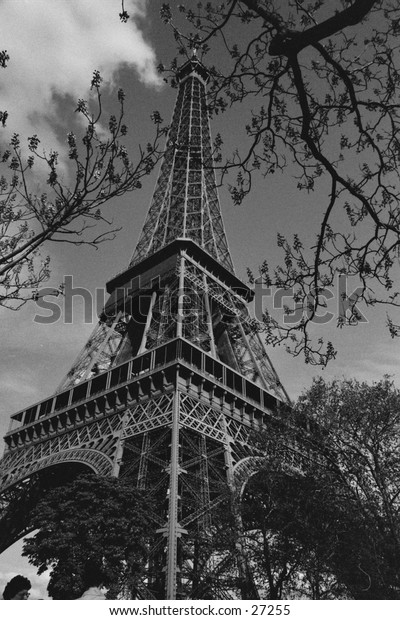 Eiffel Tour in Spring in Black and White.  Jacaranda blossoms in front
