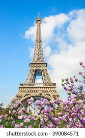 Eiffel Tower  and blooming manolia tree close up, Paris, , France