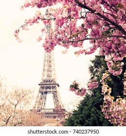 Eiffel Tower and cherry blossoms