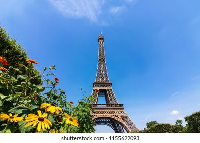 Eiffel Tower in Paris France with some nice flowers nearby