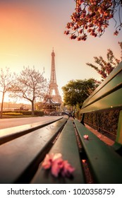 Eiffel Tower with spring trees in Paris, France