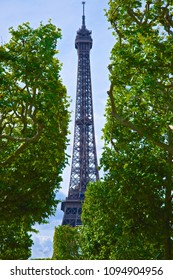 Eiffel Tower with the Trees