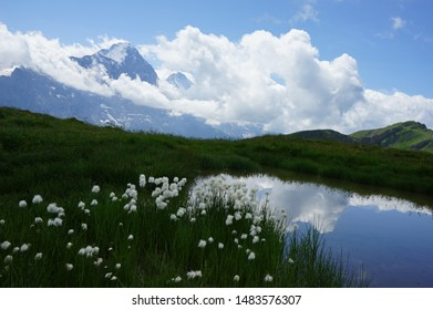 Eiger and alpine flowers on mountain Switzerland