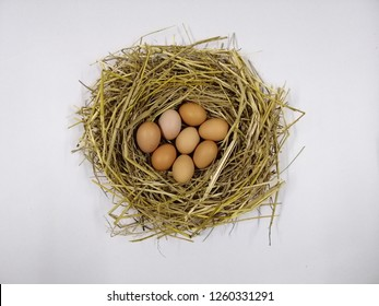 Eight eggs are placed in the nest. White background
