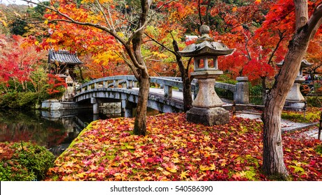 Eikando or Eikan-do Zenrinji shrine garden and bridge with red, yellow maple carpet at peak fall foliage color during late November in Kyoto, Japan. Famous landmark to see autumn leaf in Kansai.