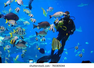 EILAT, ISRAEL - APRIL 09 2017: diver is feeding fish in the Shark Pool of Coral World Underwater Observatory aquarium in Eilat, Israel.
