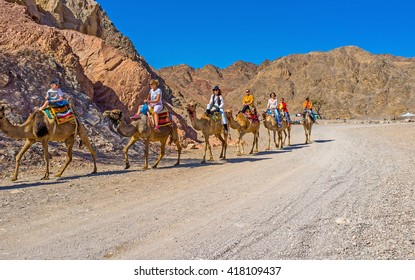 EILAT, ISRAEL - FEBRUARY 24, 2016: The camel safari among the desert rocks of Masiv Eilat Nature Reserve, on February 24 in Eilat.