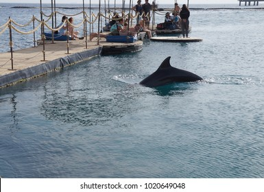 Eilat, Israel - Febuary 8 2018: People observes swimming dolphin in park Dolphin reef