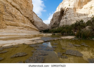 Ein Ovdat is a well kniown oasis in the Negev, southern Israel