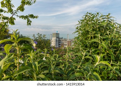 Eindhoven, The Netherlands, June 4th 2019. View from the rooftop garden with lots of greenery at Strijp S to the old philips building klokgebouw with a blue sky on a sunny day
