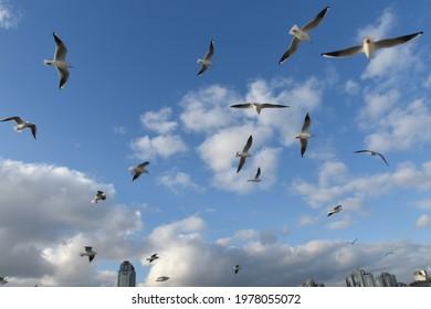 Weiße Möwen in einem sehr schönen blauen Himmel