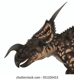 Einiosaurus Dinosaur Head - Einiosaurus was a herbivorous ceratopsian dinosaur that lived in the Cretaceous Age of Montana, North America.