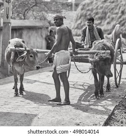 Ekachakra - March 2, 2016: Indian villagers walking with cows