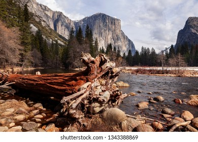 El Capitan and Merced river , Yosemite National Park.