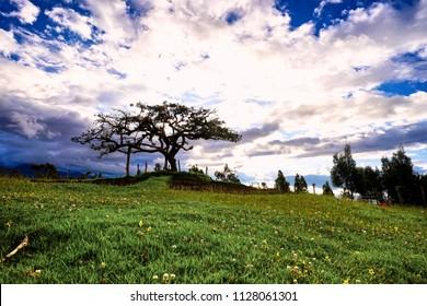 EL Lechero, der heilige Baum von Otavalo