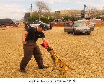El Mirage, Arizona / USA - February 2, 2019: A K9 Police Puppy, Belgian Malinois, detaining a suspect by biting their arm during an exhibition at the Safety Awareness Day in El Mirage Arizona